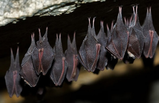 Ahuyenta los murciélagos para que no vuelvan