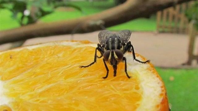 Ahuyentar moscas