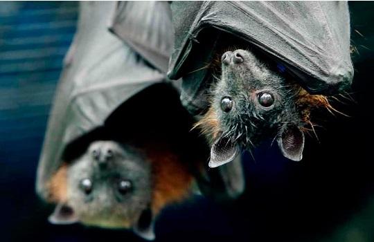 Consigue ahuyentar y eliminar los murciélagos