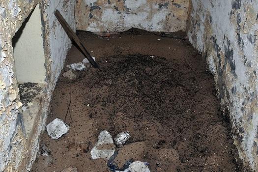 Control de plagas, si sufres una plaga de hormigas