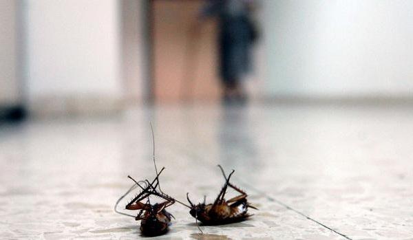 Descubre las mejores soluciones para eliminar cucarachas