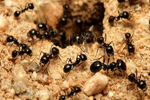 Elimina las hormigas de casa y del jardín