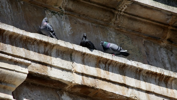 Las mejores soluciones para ahuyentar las palomas