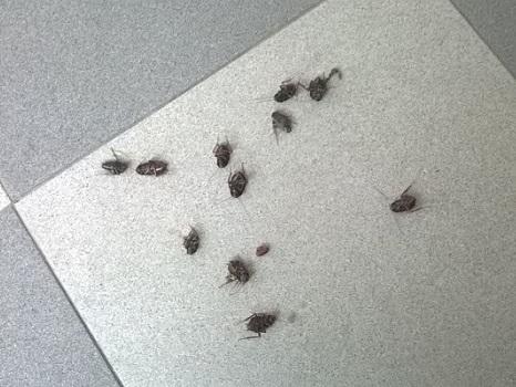Los geles con veneno para cucarachas son muy eficientes