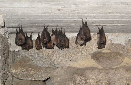 Espanta los murciélagos de casa