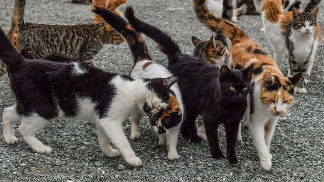 Repelente para ahuyentar gatos