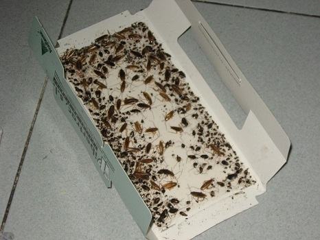 Trampas para cucarachas