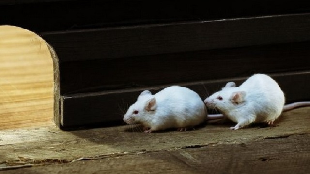 Trampas para ratones y ratas