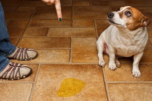 Descubre los atrayentes y repelentes de orina para perros