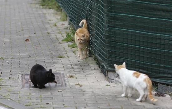 Repelentes de gatos para ahuyentarlos
