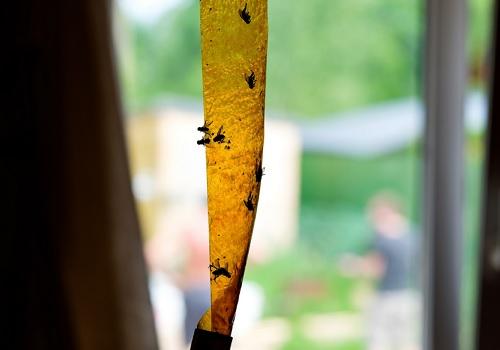 Cintas y tiras atrapa moscas para poner en casa