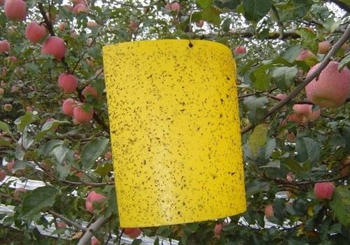 Protege tus cultivos con trampas para moscas y adhesivos