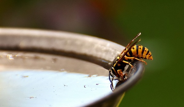 Descubre cómo eliminar las avispas