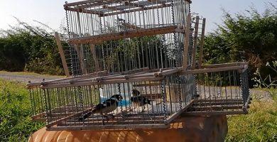 Jaula trampa para pájaros y aves