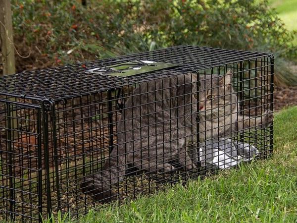 Jaulas trampas para gatos