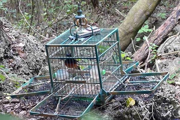 Jaulas trampas para pájaros y aves