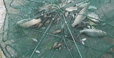 Trampa para peces