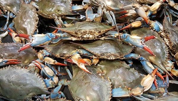Trampas para cangrejos azules