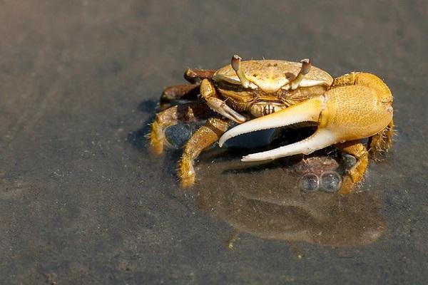 Trampas para cangrejos